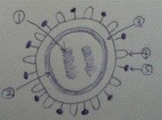 virus02.jpg
